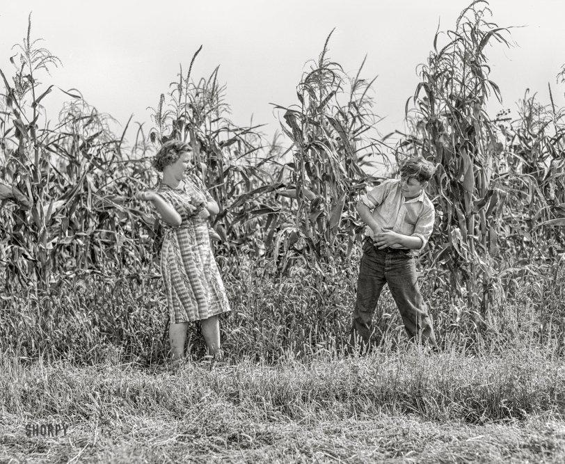 Corn Fight: 1939