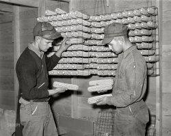 Comparing Cobs: 1939