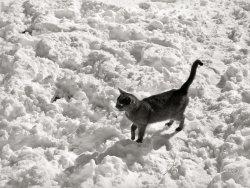 Snow-Cat: 1940