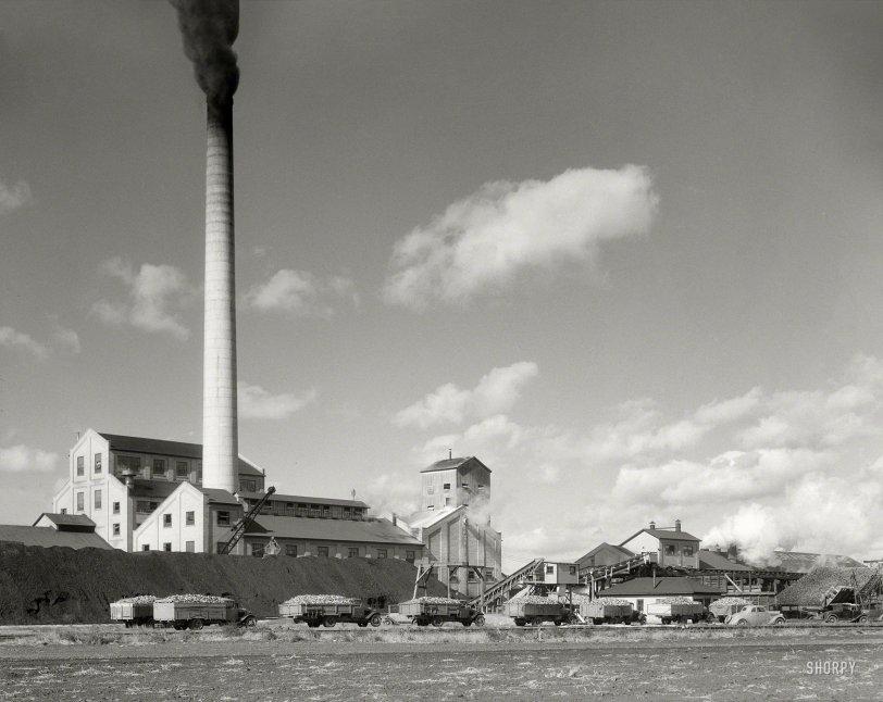 Sugar, Incorporated: 1937