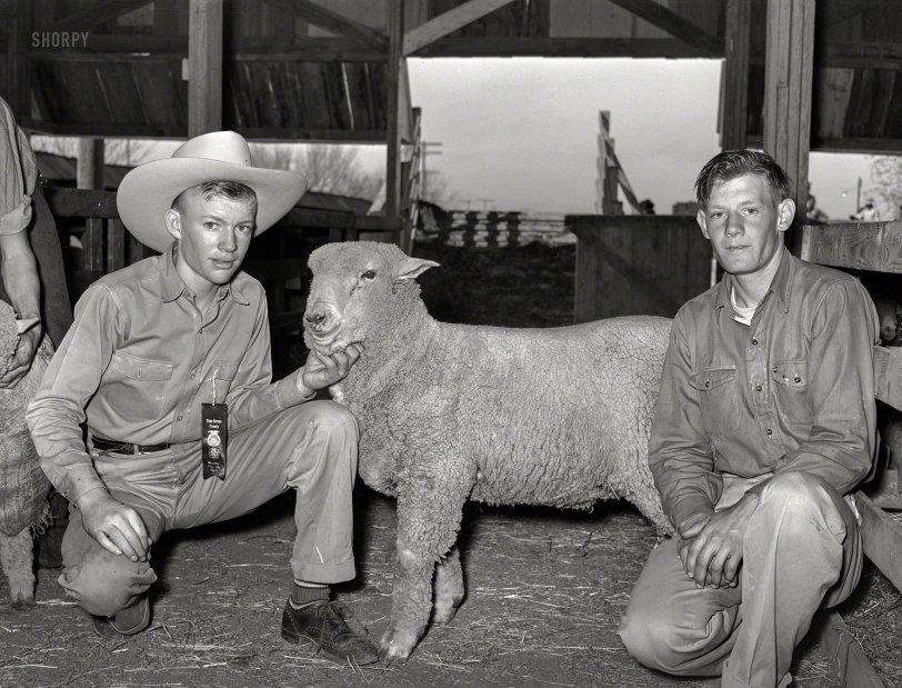 Animal Husbandry: 1940