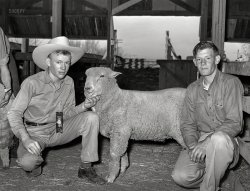 Animal Husbandry: 1940