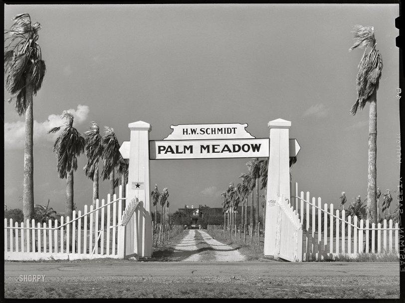 Palm Meadow: 1940