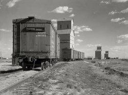 Grain to Go: 1936