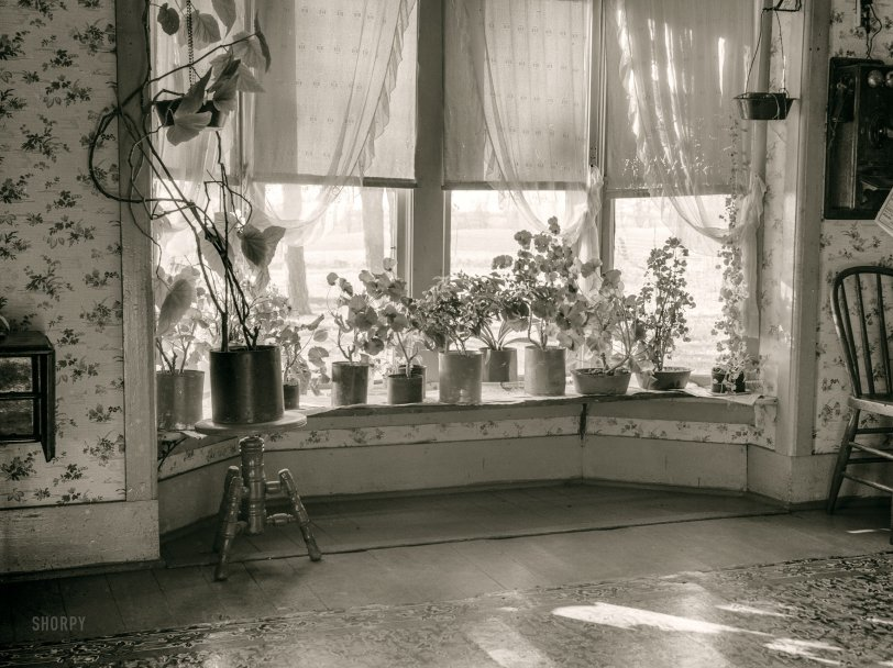 Rancho Geranium: 1936
