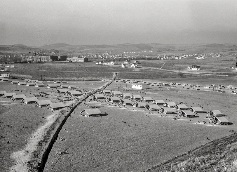 Chickenville: 1936