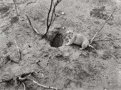 Groundhog Day: 1939