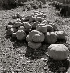Pumpkins Aplenty: 1938
