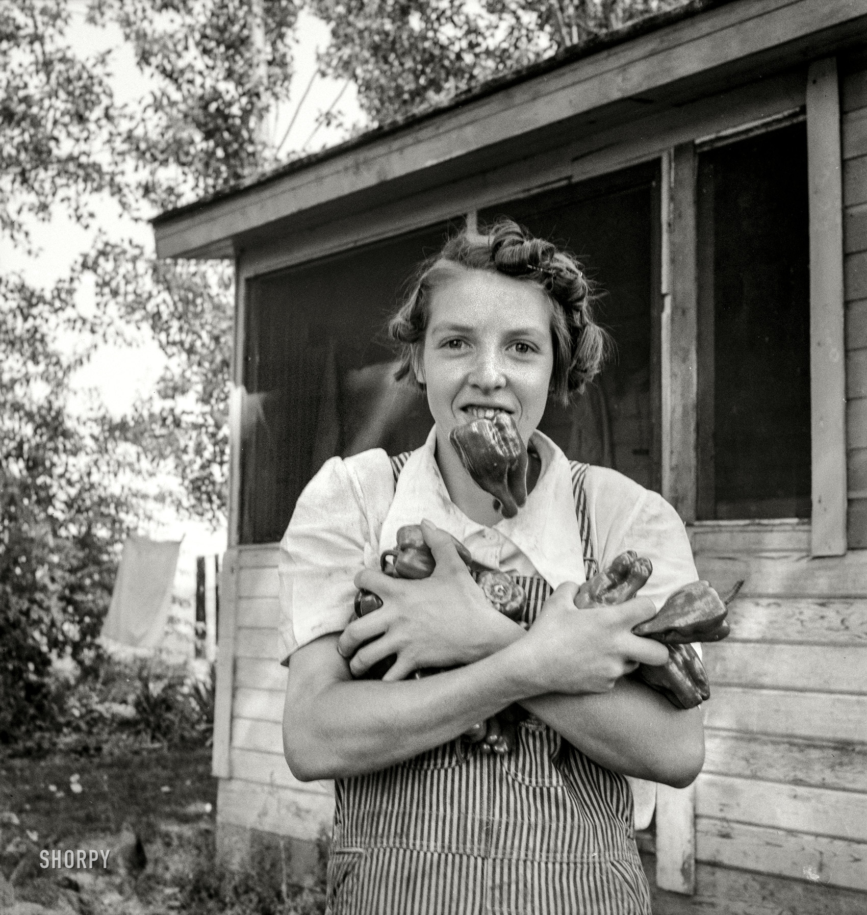 The Gallery · Agriculture · Dorothea Lange · Pepper Challenge: 1939