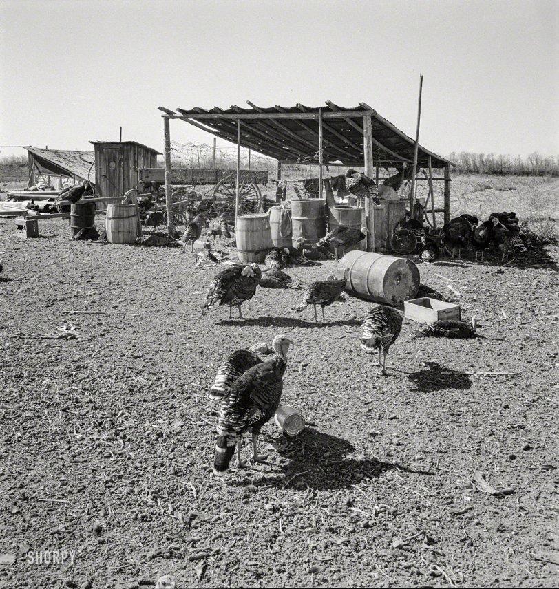 Turkey in the Straw: 1939
