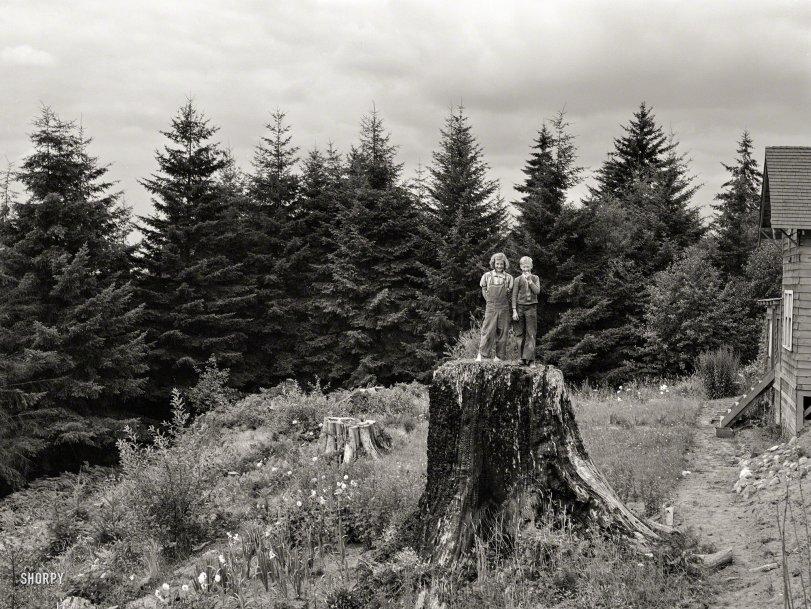 On the Stump: 1939
