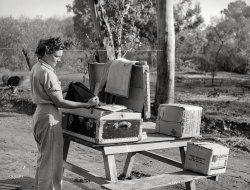 No Picnic: 1940