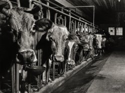 The Cheshire Cows: 1940