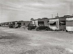 Near Belle Glade: 1939