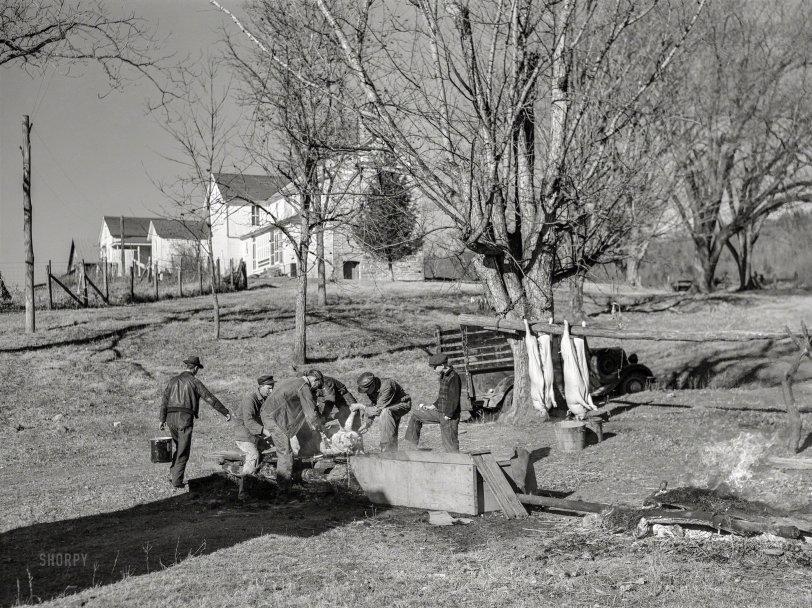 Murder, Oink: 1940