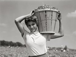 A Basket of Beans: 1941