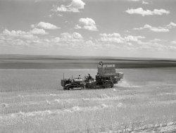Rancho Glutenous: 1941