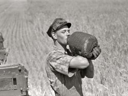 Wheat Whacker: 1941