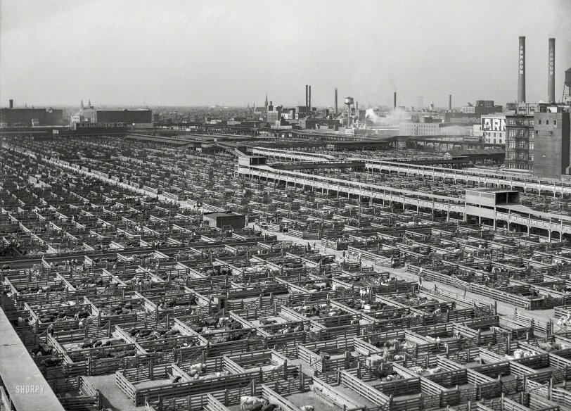 Cow Town: 1941