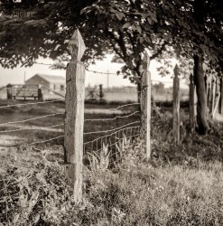 Pointed Posts: 1940