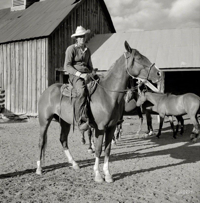 The Cardigan Cowboy: 1941