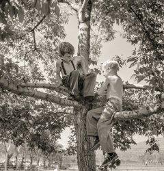 Up a Tree: 1942