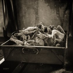 Dixie Chicken: 1941