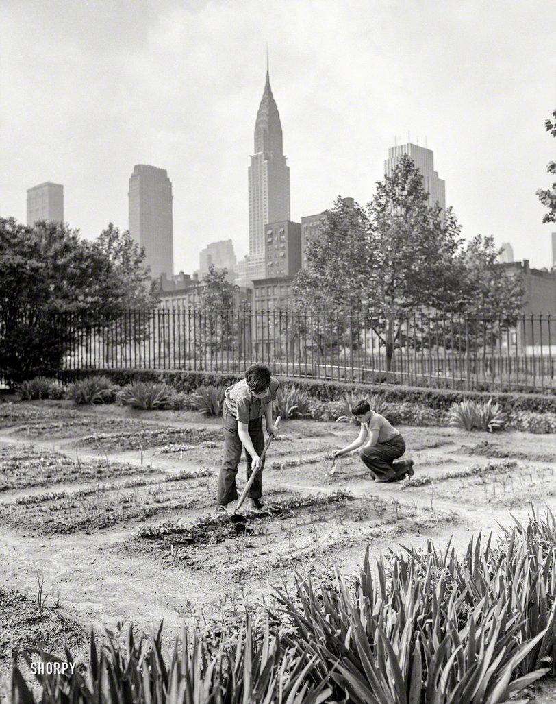 Urban Onions: 1942