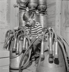 Cow Boy: 1942