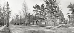Laurel in the Pines: 1901
