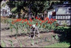 Garden Spots: 1951