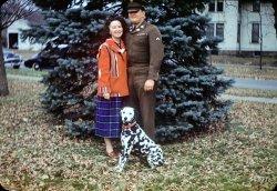 Family Tree: 1951