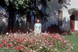 Garden of Grace: 1951