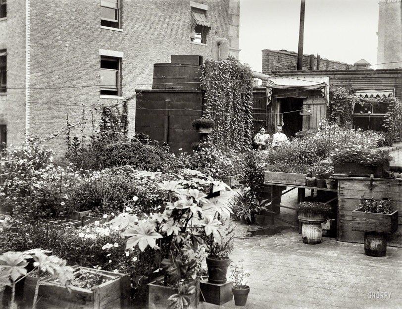 Urban Eden: 1908