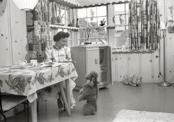 The Happy Homemaker: 1952