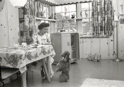 The Happy Homemaker: 1954