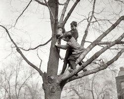 Up a Tree: 1921