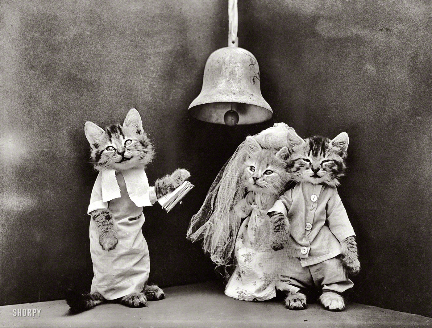 Shorpy historic picture archive cat wedding 1914 high shorpy historic picture archive cat wedding 1914 high resolution photo junglespirit Images