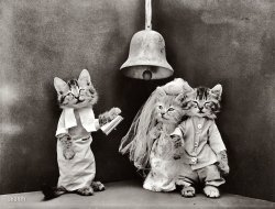 Cat Wedding: 1914