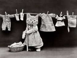 The Cat's Pajamas: 1914