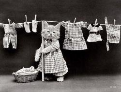 The Cat's Pajamas: 1914