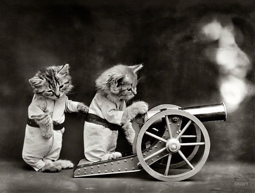 The Kittens of War: 1914