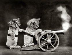 The Kittens of War: 1914