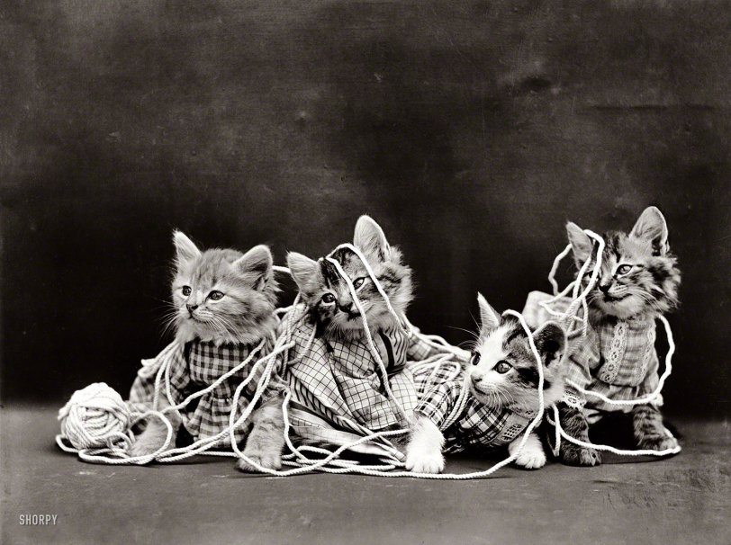 Knitting Kittens: 1914