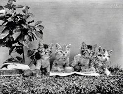 Cat Picnic: 1914