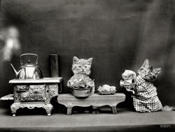 Domestic Cats: 1914