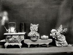 Domestic Cats: 1914