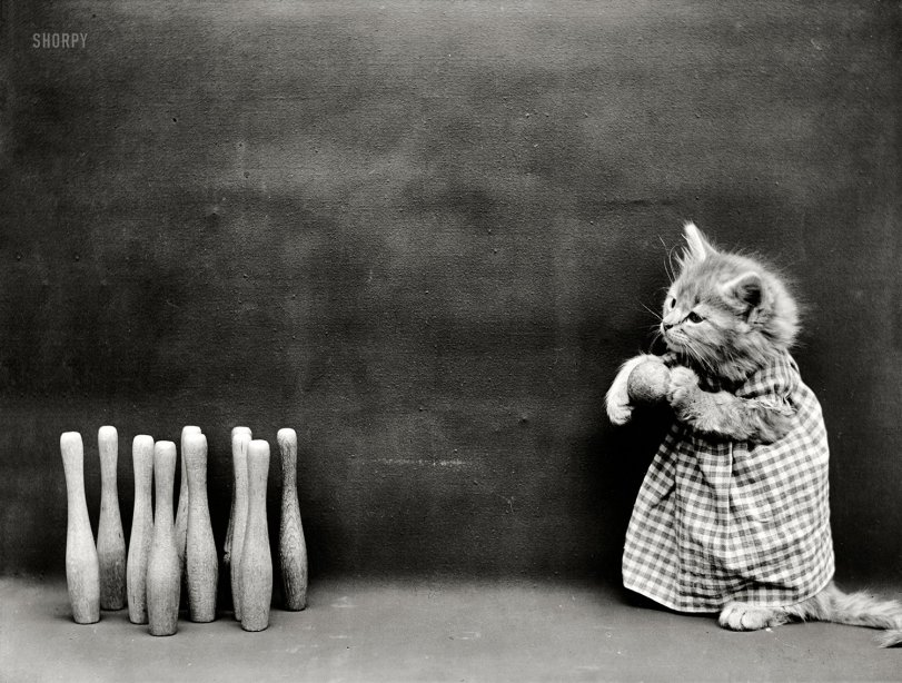 Catpins: 1914