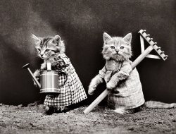 Off to the Litter Box: 1914