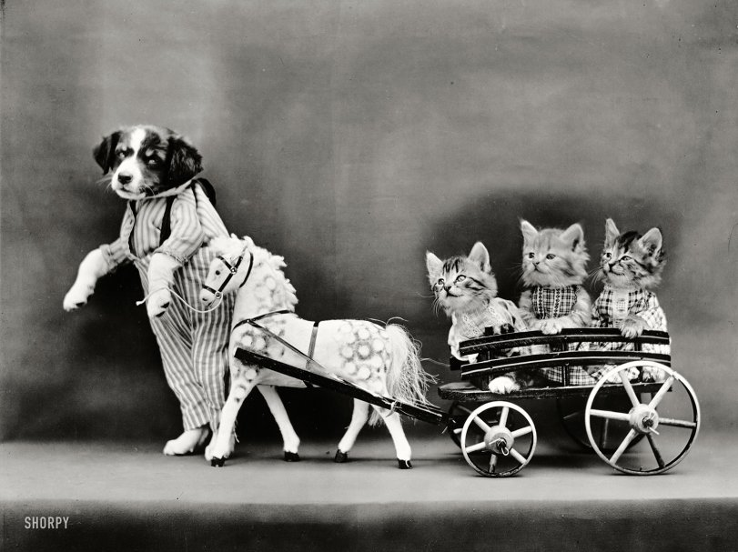 A Cartful of Kittens: 1914